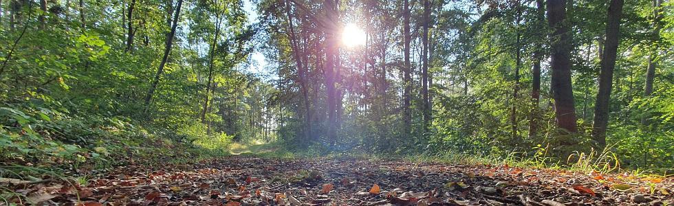 30. Hohe-Buchen-Lauf: Trails und Torten zum Jubiläum