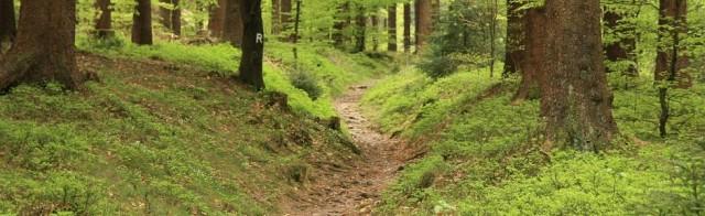 Rennsteig-Marathonstrecke bei Kilometer 27